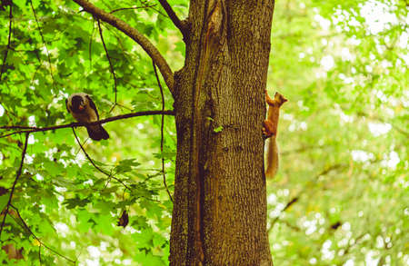Busy wildlife in urban park concept with squirrel and crow on one tree
