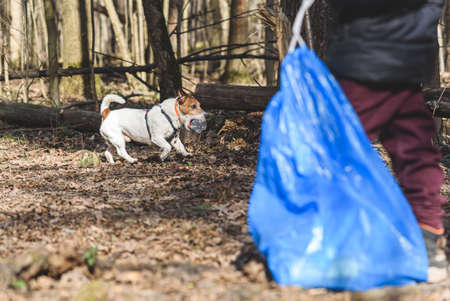 Jack Russell Terrier dog in park with family cleaning waste 免版税图像