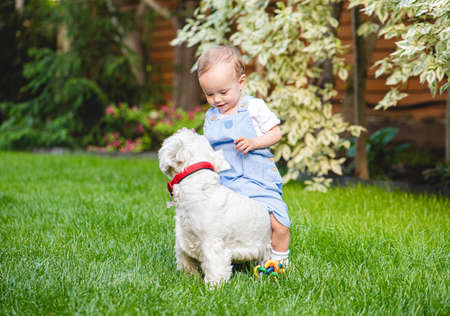 Small toddler girl playing and romping with puppy dog on green grass of backyard lawn on summer day