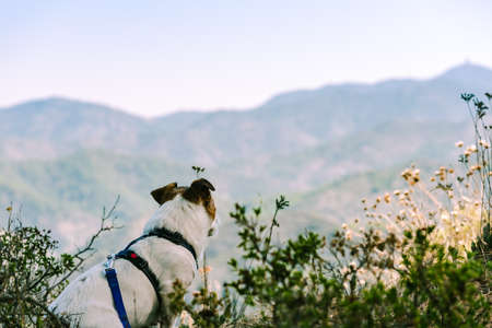 Dog having rest during hike in mountains looking at amazing Cyprus landscape 免版税图像