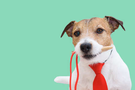 Humorous concept of Move the needle expression with dog wearing red tie and holding needle in mouth