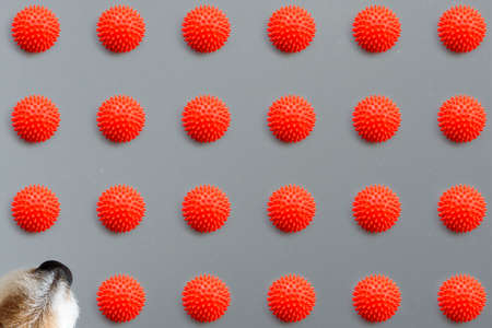 Minimalist concept of dogs life enrichment with geometric pattern made of many canine toys