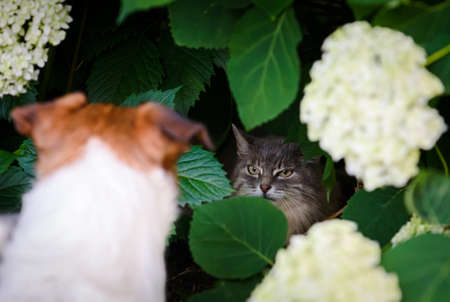 Dog and cat can not get along. Dog chasing cat to hide in bush