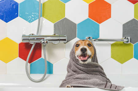Happy and funny wet dog in bathroom after washing wrapped in towel 免版税图像