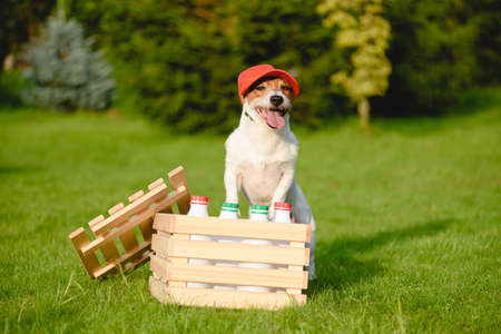 Funny dog delivers fresh dairy products from local farmer 免版税图像