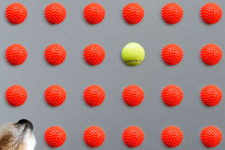 Minimalist concept of better choice for pet owners with one-of-a-kind tennis ball vs a lot of squeaky dog toys