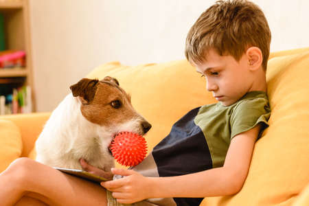 Family pet dog wants attention from young owner to play together with ball