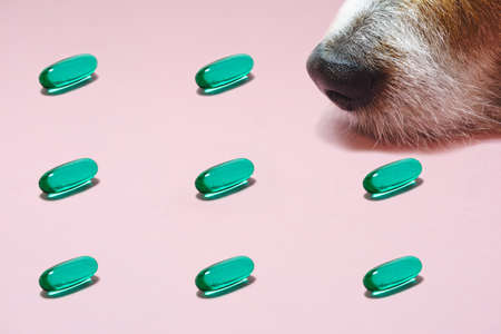Veterinary concept in minimalist style with dog nose sniffing green drug capsules 免版税图像