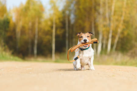 Dog holding its own leash in mouth sitting on dirt road on sunny warm Fall day inviting for walk outdoor