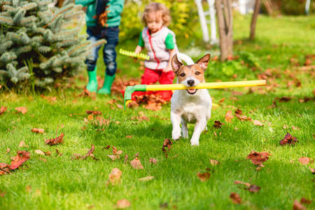 Family and pet dog doing Fall cleaning in garden and gathering old leaves at lawn