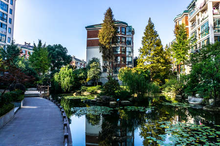 Wuhu Anhui China Water Lily on Pond with Promenade Trees and Apartment Buildings in Background Stock Photo