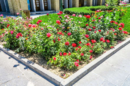 Tehran Golestan Palace Garden Red Roses and Clipped Hedges Reklamní fotografie