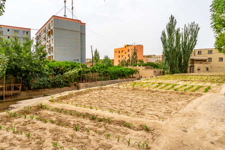 Hotan City Private Vegetable Field next to a Street in a Residential Area with Trees and Buildings at Background on a Cloudy Sky Day Stockfoto