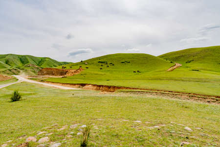 Saty Kolsai Lakes Breathtaking Picturesque Panoramic Landscape View of Horses Grazing Grass on a Cloudy Blue Sky Day