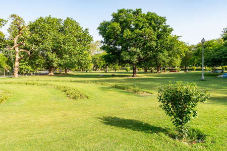 Lahore Bagh-e-Jinnah Park Picturesque View of Grass and Trees on a Sunny Blue Sky Day
