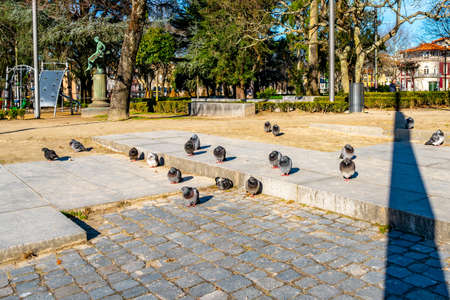 Porto Jardim da Cordoaria Park Breathtaking Picturesque View with Pigeons taking a Sunbath on a Blue Sky Day in Winter Stok Fotoğraf