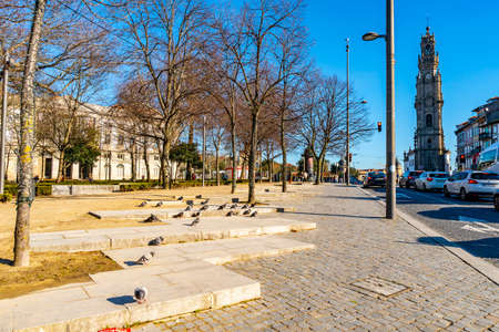 Porto Jardim da Cordoaria Park Breathtaking Picturesque View with Pigeons taking a Sunbath on a Blue Sky Day in Winter Editorial