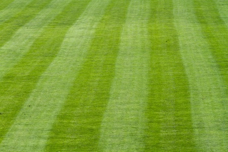 soccer field lines   photo