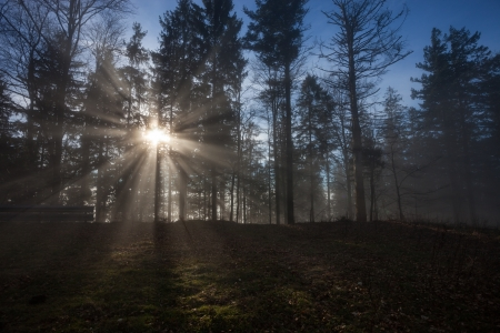 sun rays crossing a misty forest photo