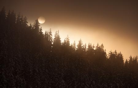 winter sun above conifer trees