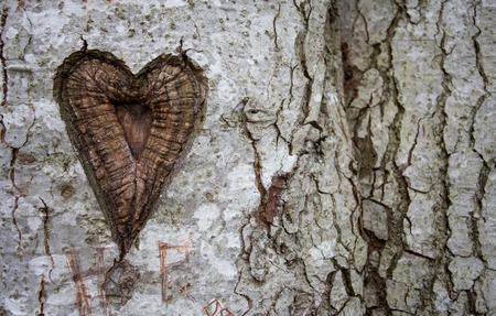 tallado en madera: corazón en árbol de abedul Foto de archivo