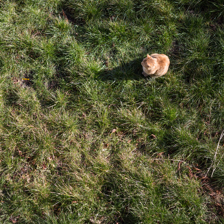 lurking: cat lurking in garden Stock Photo