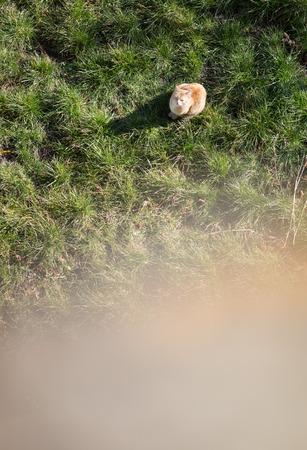 lurk: cat lurking in garden Stock Photo