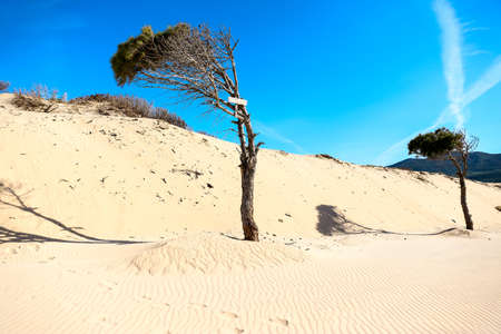 Large sand dunes and tree