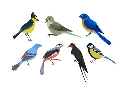 A set of birds that live in various areas on the planet 矢量图像