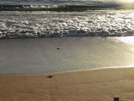 shoreline: Hermosa costa