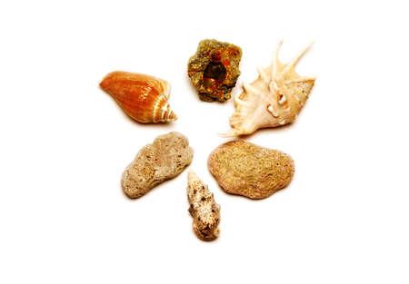 Sea shell with white background Reklamní fotografie