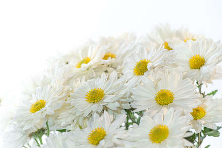 beautiful bouquet camomile for the holiday Imagens