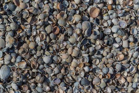 seashells closeup background, texture