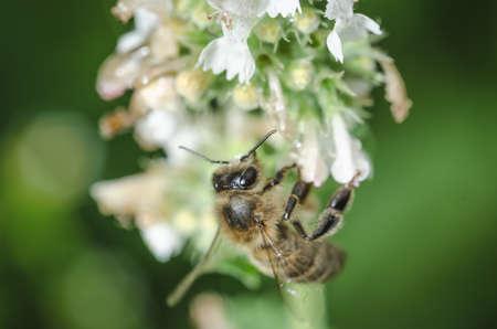 Bee pollinates a flower Banco de Imagens