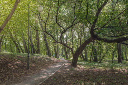 Walkway in the park in the shadow of green dressings. Beautiful landscape of summer forest.