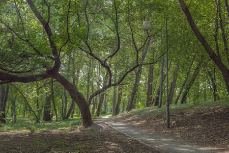 Walkway in the park with green trees. Beautiful landscape of summer forest. Foto de archivo