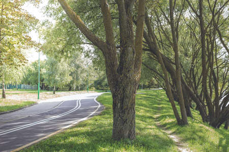 Bike path in the park with green grass and beautiful alea trees. Beautiful summer landscape. Foto de archivo