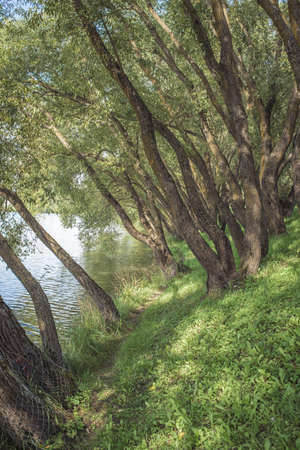 Steep lake shore with trees. Beautiful landscape of summer