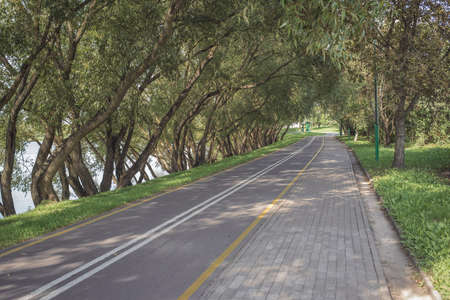 Bike path in the park with green grass and alea trees. Summer day. Beautiful  landscape.
