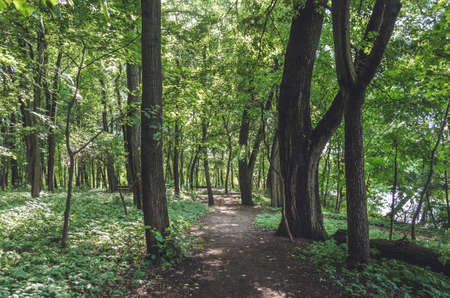 Forest Road with green trees/forest path overgrown with trees