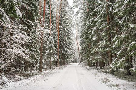 Road in a snowy forest. Beautiful landscape of snowy forest Standard-Bild