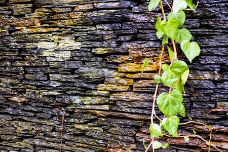 stone wall wet bright beautiful jpg 6000x4000