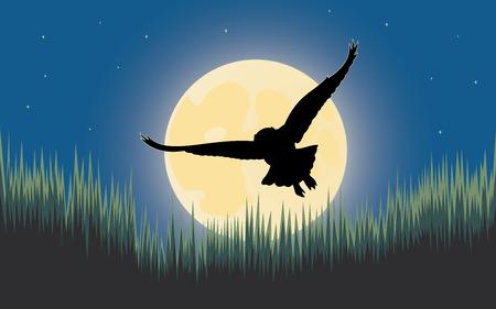 night owl: Owl night hunter