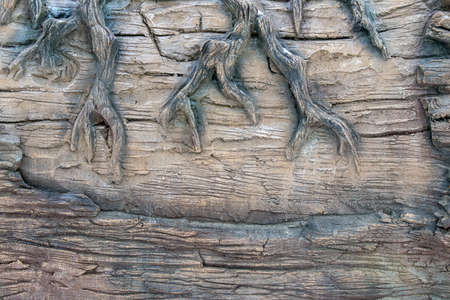 Gnarled and bumpy tree roots emerge on a sturdy petrified tree on a sunny day, great for backgrounds and textures, copy space and wallpaper