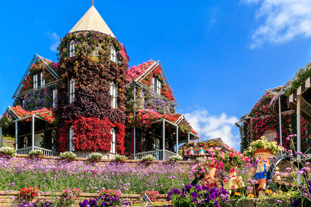 Dubai, UAE - January 5, 2017. Dubai Miracle Garden - Floral house and dolls on the bench. Dubai Miracle Garden is the largest natural flower garden in the world