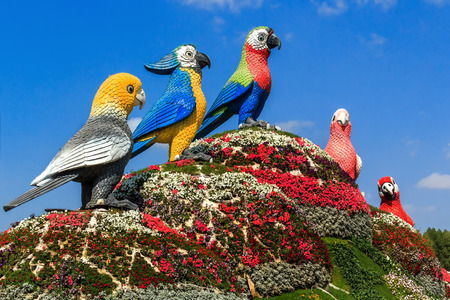 Dubai, UAE - January 5, 2017. Dubai Miracle Garden -Sculptures of birds parrots. Dubai Miracle Garden is the largest natural flower garden in the world with a wide variety of different colors arranged in a heart shape, star, or other shapes of houses