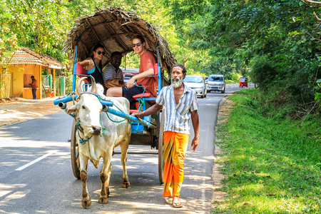 Sigiriya, Sri Lanka - January 4, 2018. Man in the sarong is leading an oxen with a cart on the road during an excursion with tourists