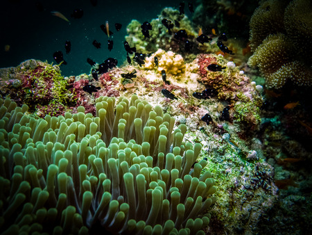 Anemone and small fishes at night. Macro photography Stock Photo
