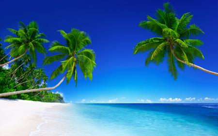 Tha palmas en la playa de arena blanca