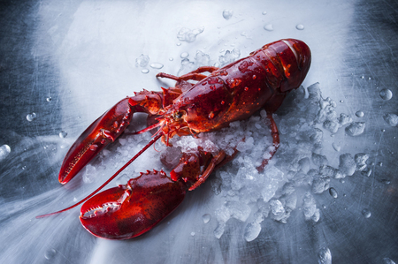 A big lobster on steel table 写真素材